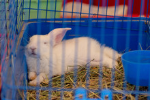 The White Rabbit Sleeps In A Cage.