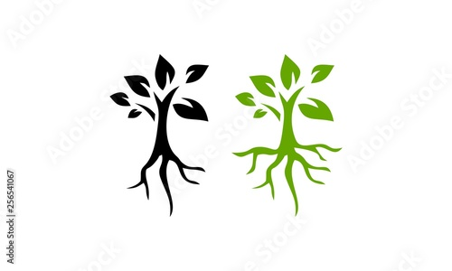 Canvas root seed plant vector