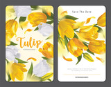 Fototapeta Tulipany - Blooming beautiful yellow with white tulip flowers background template. Vector set of blooming floral for wedding invitations, greeting card, voucher, brochures and banners design.