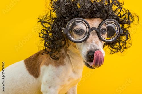 Photo Smart professor nerd dog portrait in black curly wig and glasses