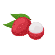 Lychee Fruit On White Background. Tropical Fruit In Flat Style.
