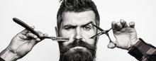 Bearded Man, Bearded Male. Por...