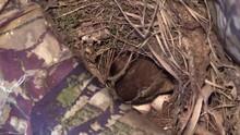 Bird Carolina Wren 2 Eggs With...