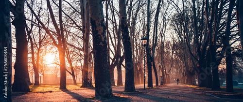 Cuadros en Lienzo Beautiful tree avenue at the sunrise/sunset