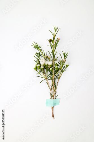 Fotografie, Obraz  아름다운 봄 꽃들, 활짝핀 아름다운 꽃 ,꽃 오브젝트