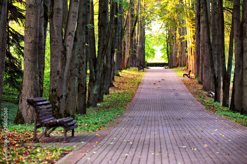 Photo Stands Road in forest Autumn landscape - beautiful autumn pathway in park. Old high linden trees and benches on the park alley. Sunny autumn day.