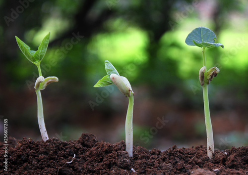 trees growing on fertile soil in germination sequence / growing plants / plant growth