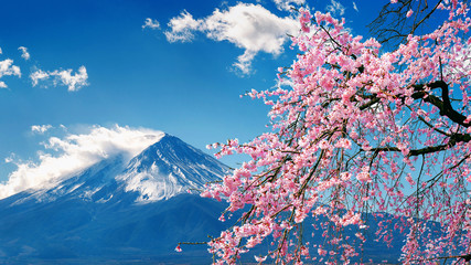 Obraz na SzkleFuji mountain and cherry blossoms in spring, Japan.