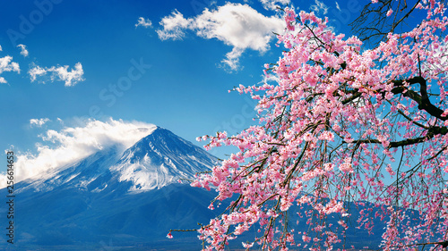 Canvas Fuji mountain and cherry blossoms in spring, Japan.