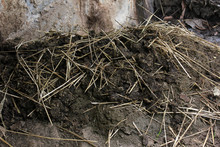 Fresh Cow Dung On Grass - Cow Manure  India,biogas Plant At Farm.