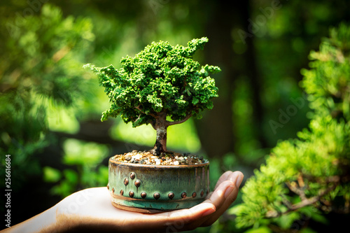 Foto op Aluminium Bonsai Sekka Hinoki bonsai in Hand
