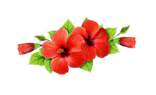 Red Hibiscus Flowers In A Tropical Arrangement