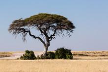 Paisaje De La Sabana En Namibi...