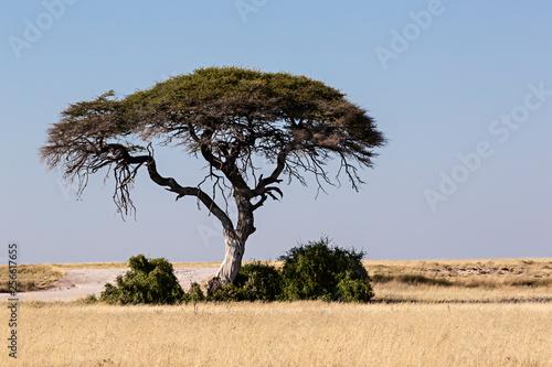 Fotografiet Paisaje de la sabana en Namibia, África.