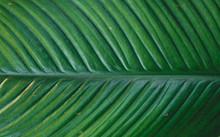 Leaves Detail Dark Tone Green Leaves Background
