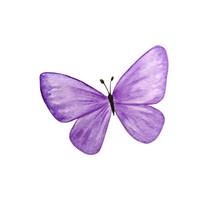 Watercolor Bright Purple Butterfly