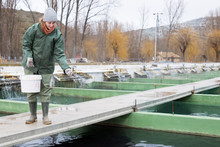 Woman Feeding Fish In Tanks On Farm