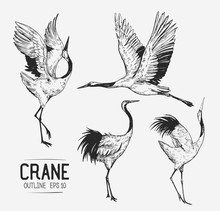 Sketch Of Crane. Hand Drawn Il...