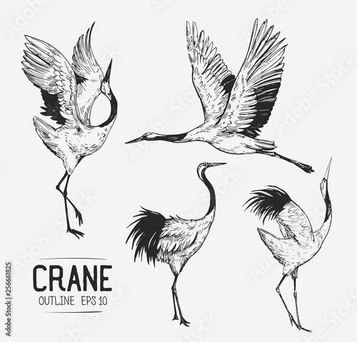 Fotografia Sketch of crane. Hand drawn illustration converted to vector