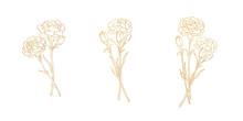 Golden Lines Of Carnation, Bla...
