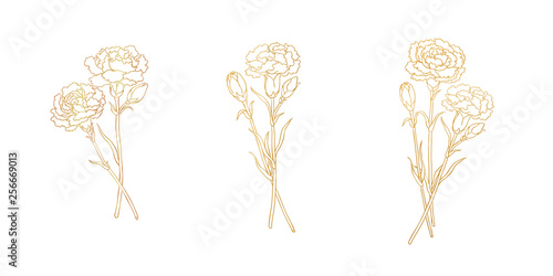 Fototapety, obrazy: Golden lines of carnation, blank background