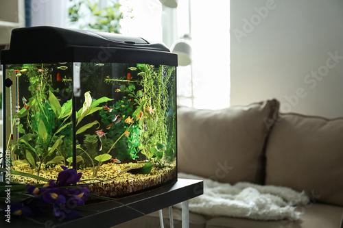 Carta da parati Beautiful aquarium on table in room