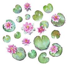 Set Of Waterlilies Watercolor ...