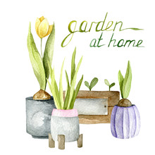 Watercolor Illustration Of Garden Elements. Growing Plants
