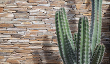 Green Pipe Organ Cactus In Fro...
