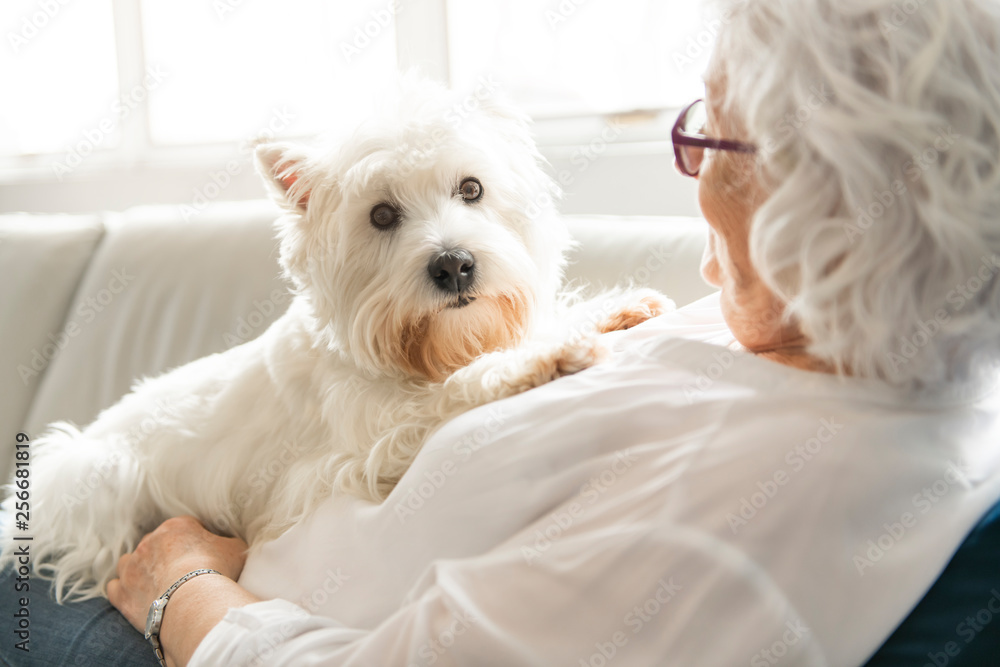 Fototapety, obrazy: The Therapy pet on couch next to elderly person in retirement rest home for seniors