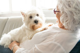 Fototapeta Zwierzęta - The Therapy pet on couch next to elderly person in retirement rest home for seniors