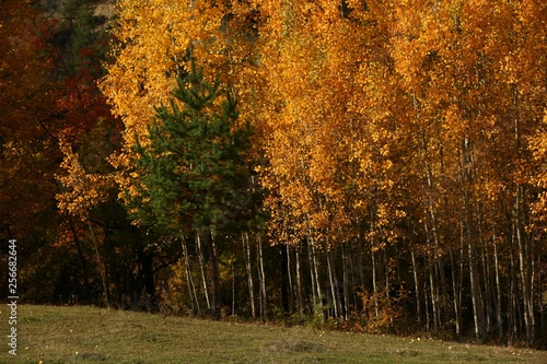 Beautiful autumn landscape with yellow trees and sun. Colorful foliage in the park. Falling leaves natural background  © murat