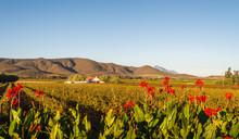 Little Karoo Landscape, House,...
