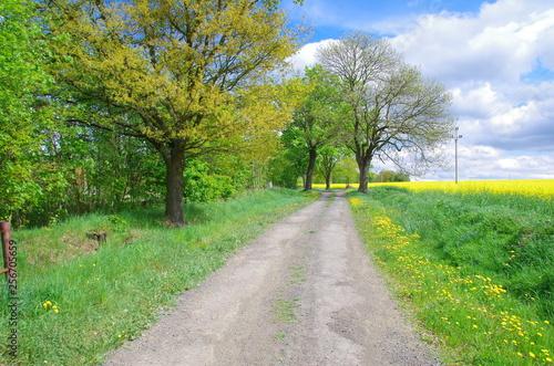 Fototapeta wiejska droga obraz