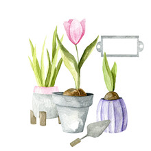 Watercolor Composition Of Gardening Flowers And Tools