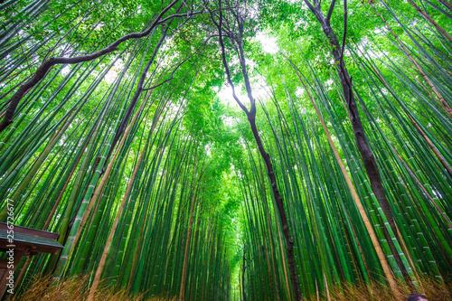 green-bamboo-forest-background-in-arashiyama-kyoto