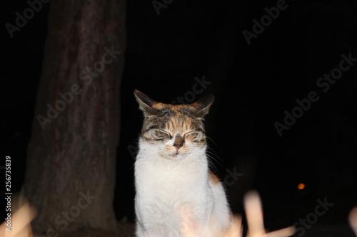 Fotografie, Obraz  a cute cat