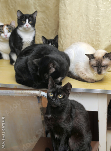 Fotografie, Obraz  many cats sit together in a room