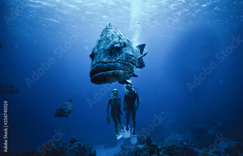 Photo  Sucba Diving Barier reef