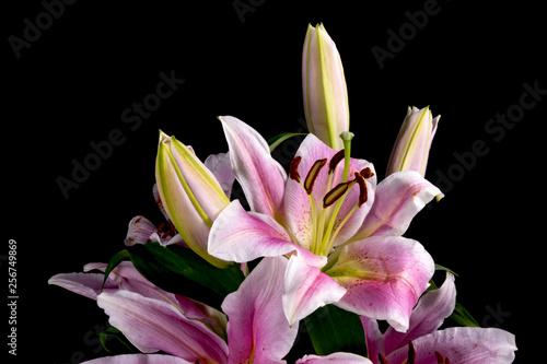 Foto Stargazer Lilies