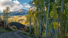 Golden Autumn Aspen On Last Dollar Road - Scenic Drive -  Telluride Colorado