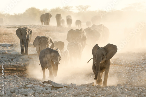 Photo  Elephant herd at dusty water hole