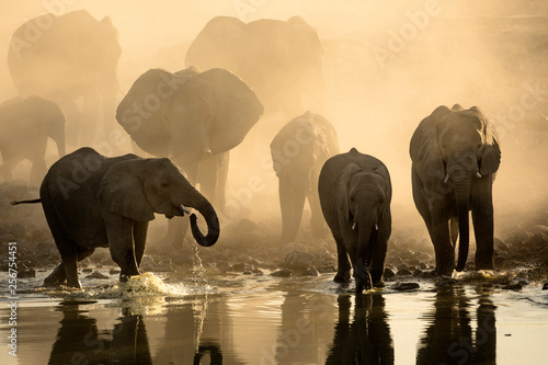 Elephant herd at a water hole Wallpaper Mural