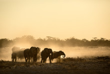 Elephant Herd At Dusty Water Hole