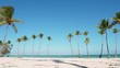 White beach sand palm trees isolated and sky background. Dominican republic Punta Cana beaches. The best beaches in the world. blue water at Caribbean sea. Amazing and beautiful beach and palms