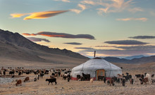 Goats Surrounding A Yurt In We...