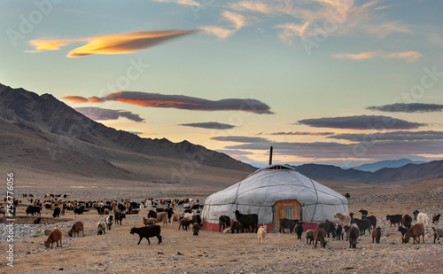 goats surrounding a yurt in Western Mongolia Canvas Print