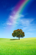 Idyllic View, Lonely Tree With Rainbow On Green Field