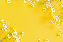 Flowers Composition. Chamomile Flowers On Yellow Background. Spring, Summer Concept. Flat Lay, Top View, Copy Space, Square