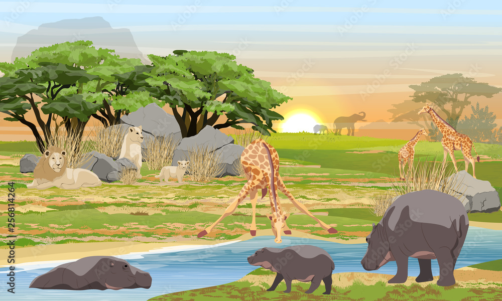 Fototapeta Lions, giraffes, hippos and elephants in the African savannah. Predators and herbivores at a watering place. Wildlife of Africa. Realistic Vector Landscape